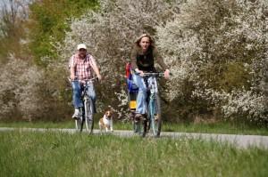 Radfahrer-auf-Radweg-bei-Neustadt